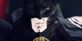 El nuevo superhéroe gatuno