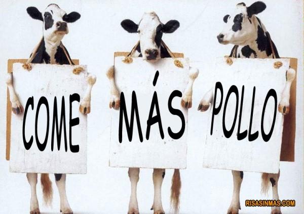 Vacas haciendo promoción del pollo