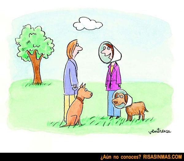 Perfecta simbiosis entre los perros y sus dueños