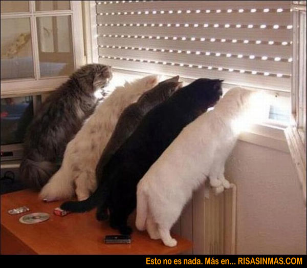 Curiosidad nivel gato