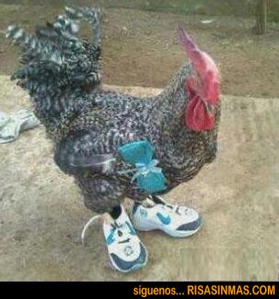 El gallo con botas