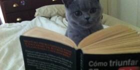 Explicación del éxito de los gatos en YouTube