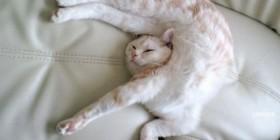 Los gatos son únicos