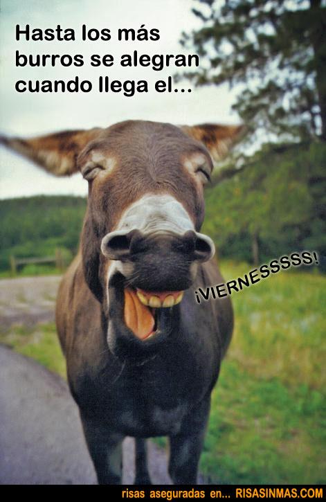 Hasta los más burros se alegran cuando llega el...