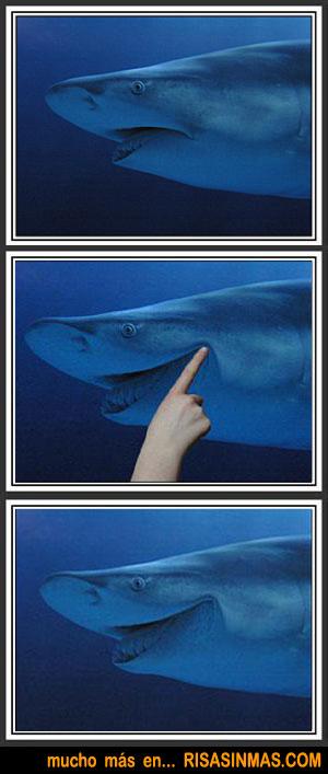 La sonrisa del tiburón