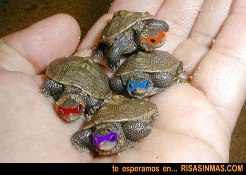 Las Tortugas Ninja de bebés
