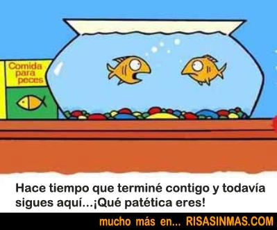 Pareja de peces discutiendo