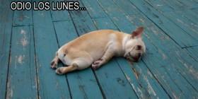 Odio los lunes...