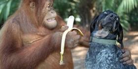 ¿No te gustan los plátanos?