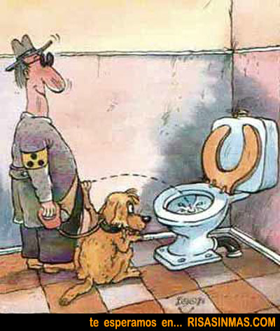 Tareas de un perro lazarillo