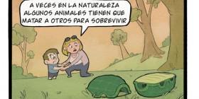 Tortugas durmiendo...