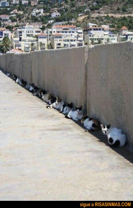Cuarenta gatos a la sombra