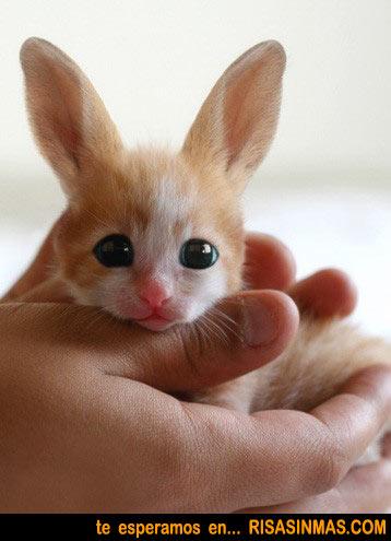 Descubierta nueva especie: El gatonejo