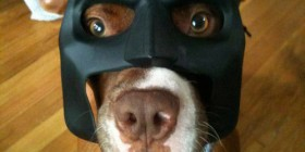 Disfraces perrunos: Batman