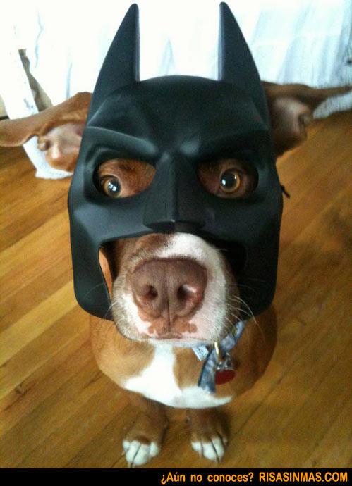 Disfraces perrunos: Batman