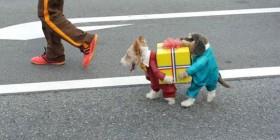 Disfraces perrunos: Perros llevando un regalo