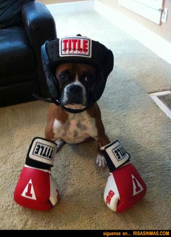 Disfraces perrunos: Boxeador