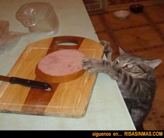Gatito ladrón de comida