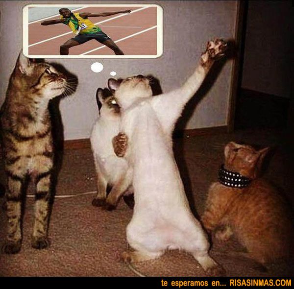 Gato imitando a Usain Bolt
