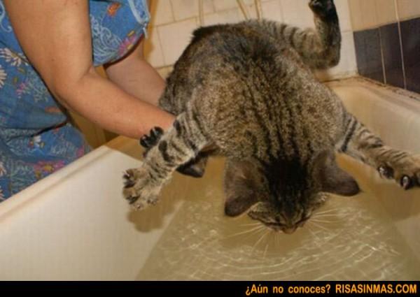 Gato resistiéndose al baño