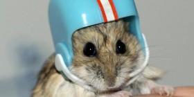 Nueva estrella de la NFL