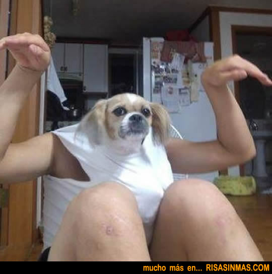 Perro disfrazado de hombre