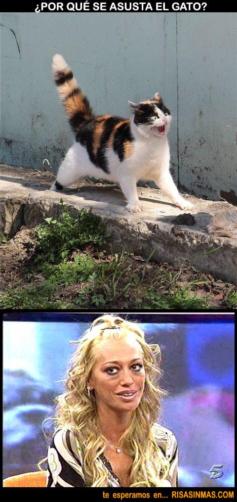 ¿Por qué se asusta el gato?