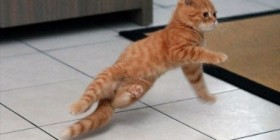 Gatito haciendo breakdance