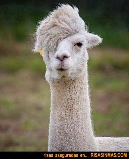 Nuevas tendencias de peluquería 2012