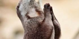 Nutria rezando