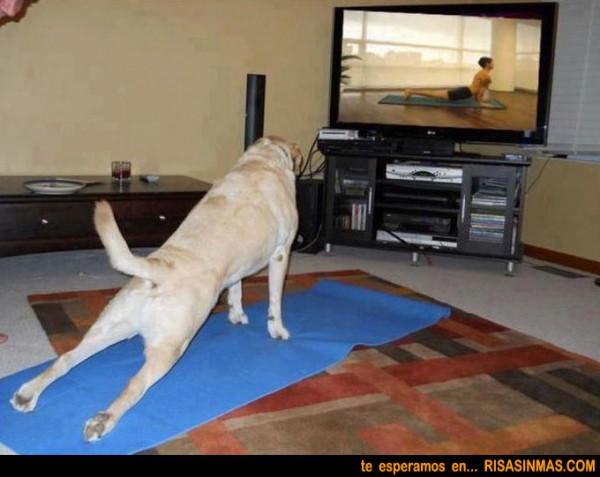 Perro haciendo su sesión de gimnasia