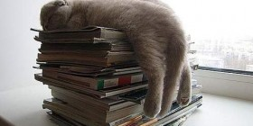 Posturas gatunas: sobre unos libros