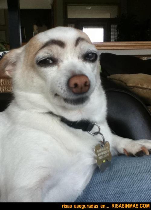 ¿Te gustan mis cejas, verdad?