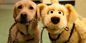 Busca las diferencias entre los perros