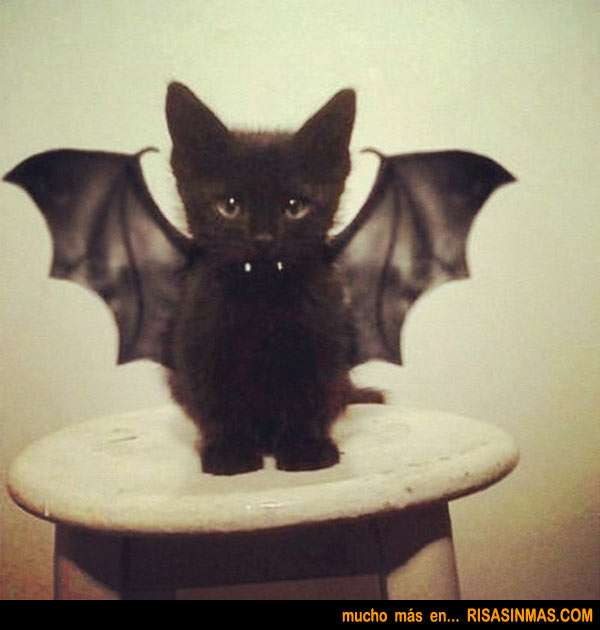 Disfraces para Halloween: Gato disfrazado de vampiro