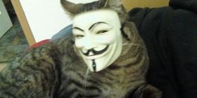 Gato disfrazado de V de Vendetta