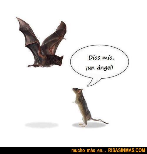 Ratón asombrado