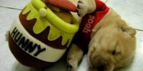 Winnie Pooh versión cachorro