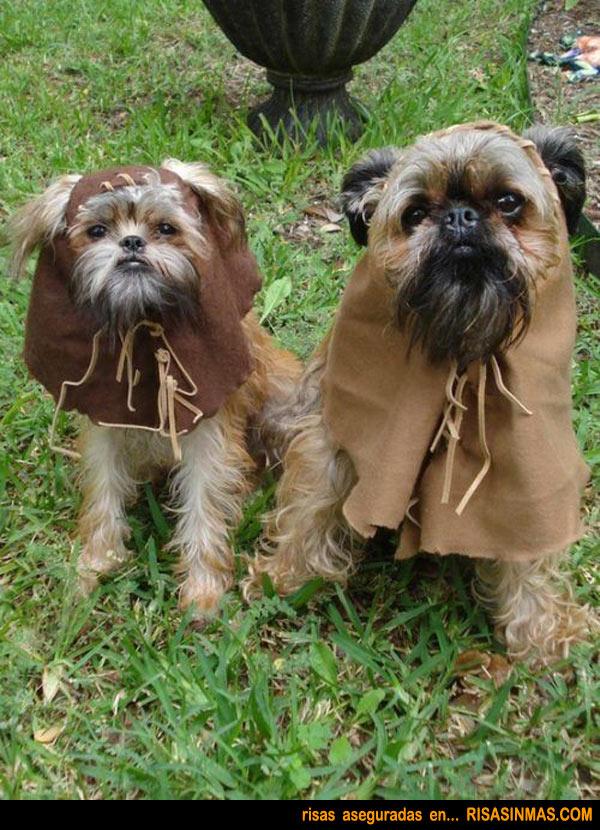 Disfraces perrunos: Ewoks