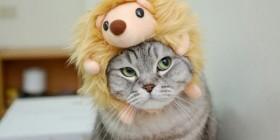 Gato con gorro modelo erizo