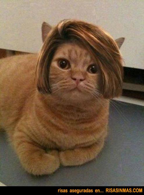 Gato peinado con personalidad