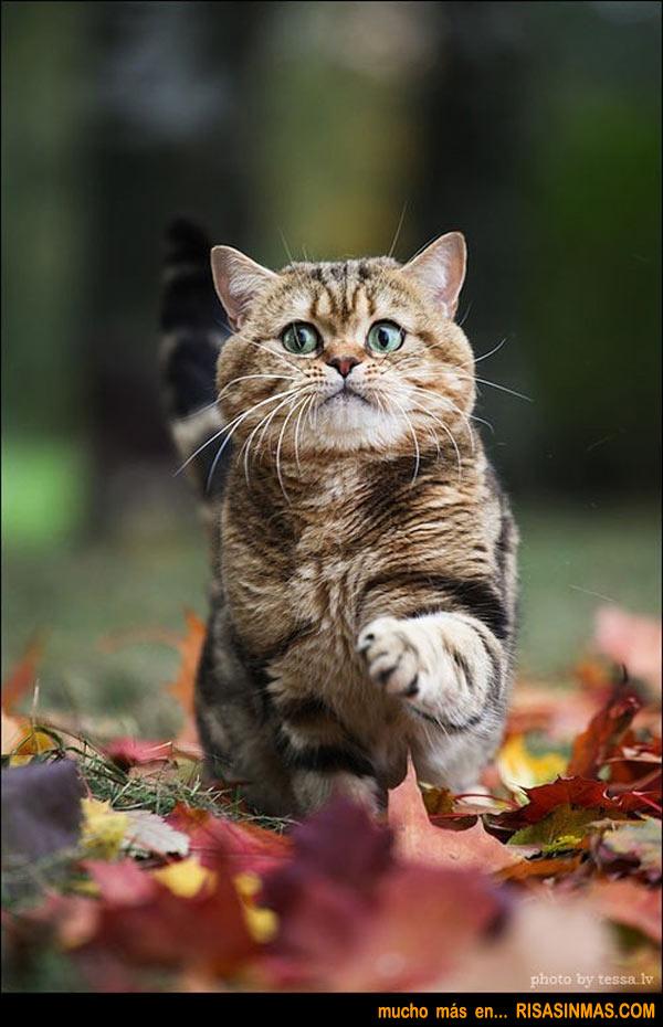 Gato pisando con cuidado