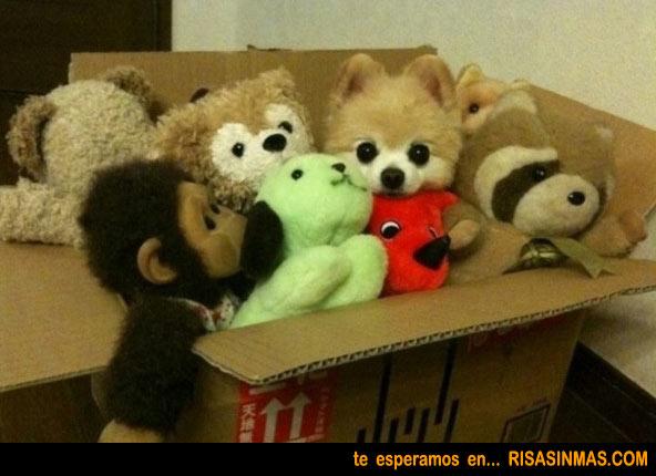 La caja de los peluches