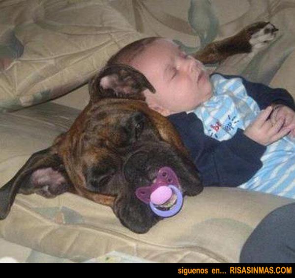 La siesta del perro y el bebé