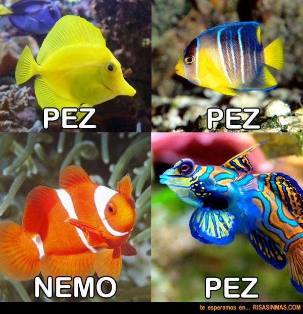 Nemo y los peces
