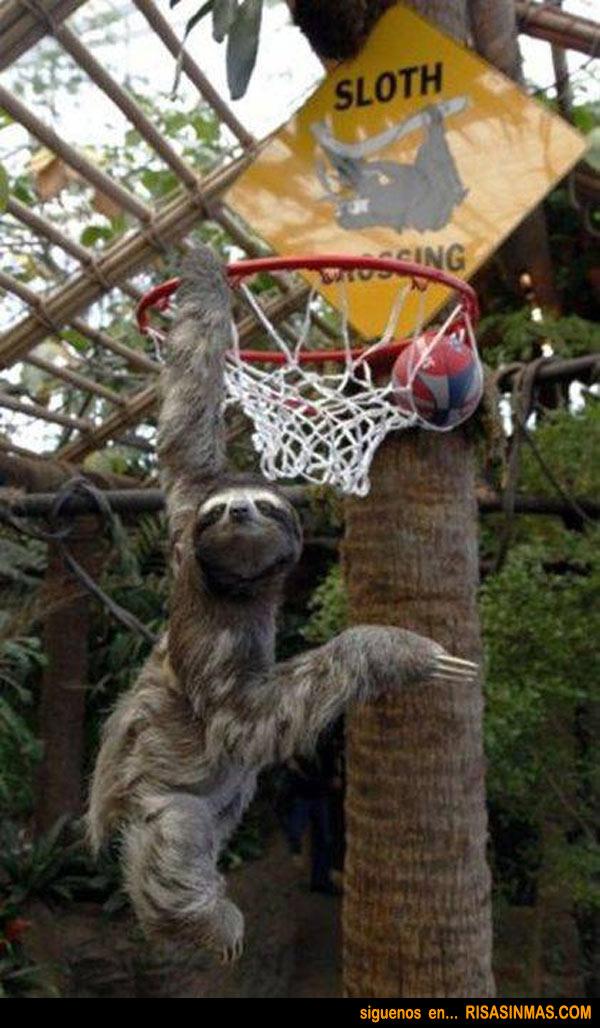 Perezoso fichado por la NBA
