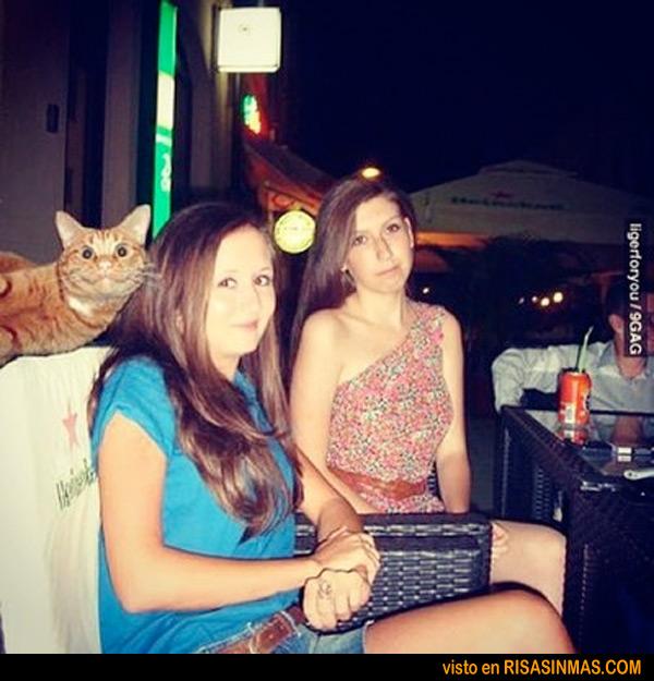 La fotobomba del gatito
