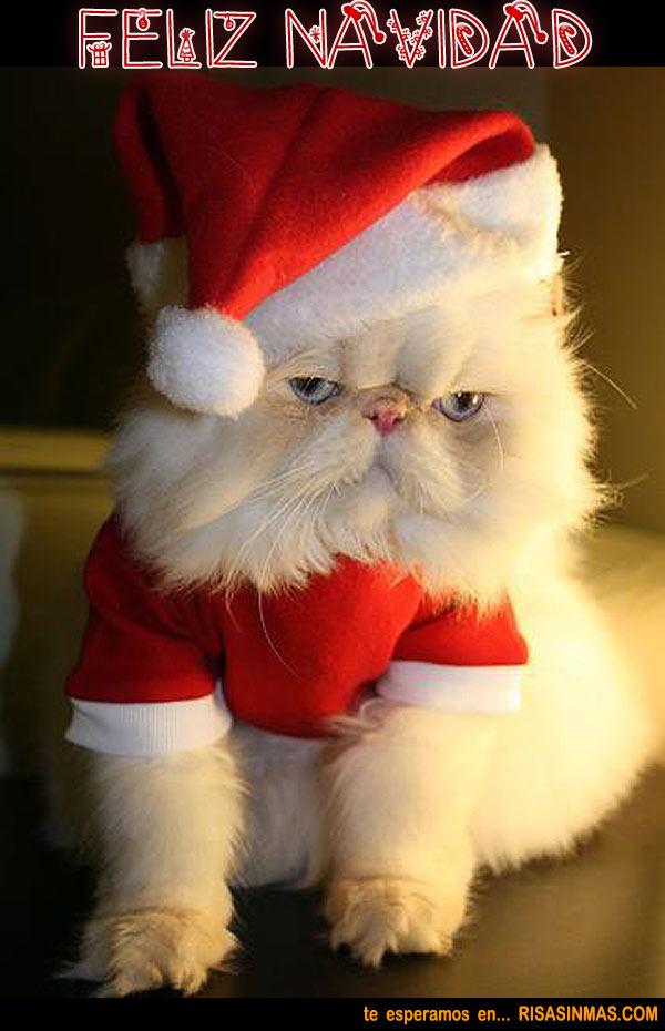 Gato Papá Noel