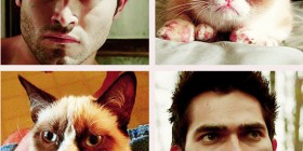 Parecidos razonables: Gato cabreado y Tyler Hoechlin
