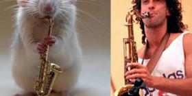 Parecidos razonables: Hamster y Kenny G
